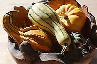 Arrangement of Autumn ornimental Squash