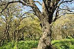 Alonei Yitzhak forest