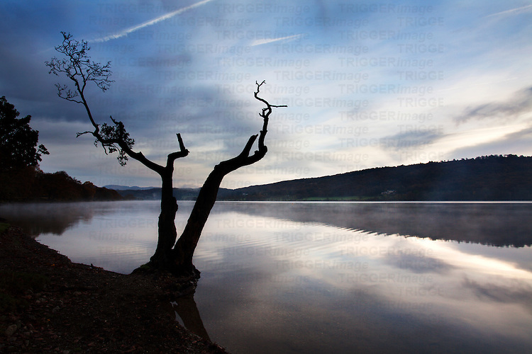Lone Tree by Coniston Water at Dawn near Coniston Cumbria England