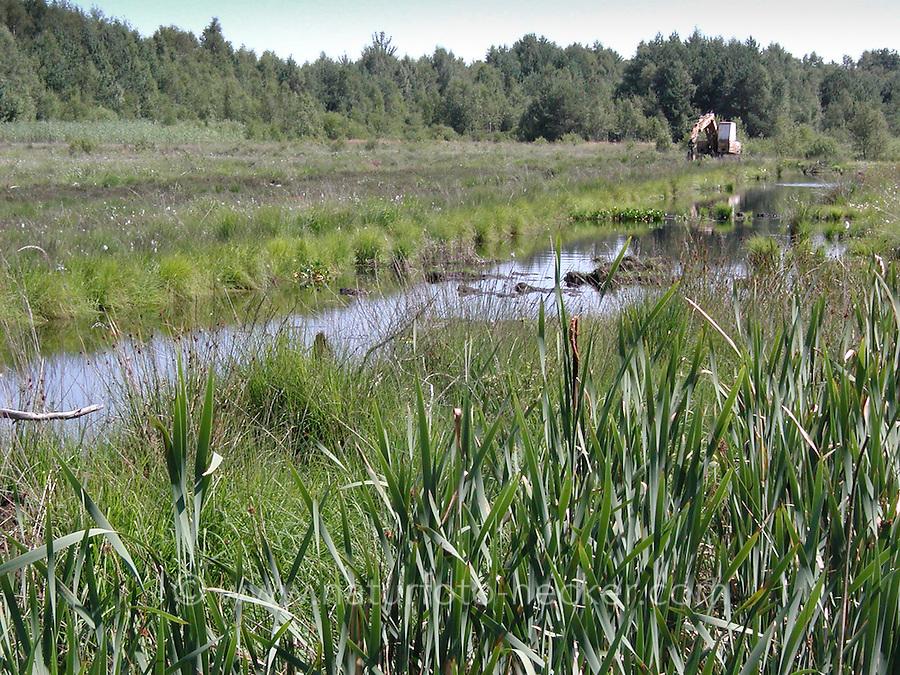 Moor, Sumpf in Nord-Deutschland, Moorlandschaft, Moorweiher, Torfstich durch Torfabbau, Torf