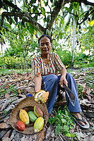 A woman harvesting cacao or cocoa pods, Sausu Peore, Central Sulawesi, Sulawesi, Indonesia.