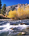 Fall Colors - Truckee River Flow