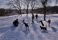 Dogs and owners congregate in Prospect Park on a winter morning.