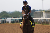 HOT SPRINGS, AR - April 14: Count Fleet contender Wabel jogs at Oaklawn Park on April 14, 2017 in Hot Springs, AR. (Photo by Ciara Bowen/Eclipse Sportswire/Getty Images)