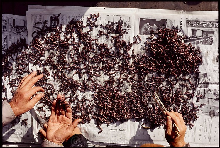 Boiled zaza-mushi, the larvae of the aquatic cossid moth, are laid out on newspaper to be cleaned of river debris in Ina City, Japan. Zaza-mushi hunters must be licensed to harvest the aquatic creatures. The zaza-mushi are sautéed with soy sauce and sugar and eaten as an appetizer. (Man Eating Bugs page 34,35)