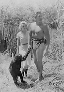 December 1984. Los Angeles, CA. Cheetah, the most famous male chimp in the world, co-starred with Johnny Weissmuller and Maureen O'Sullivan in Tarzan movies. Cheetah starred in many other films until his death, at the age of 80, in December 2011. Cheetah was adopted by trainer Tony Gentry in 1932, when he was only a few months old, in Liberia, Africa. Film memorabilia reproduced with permission from Tony Gentry.