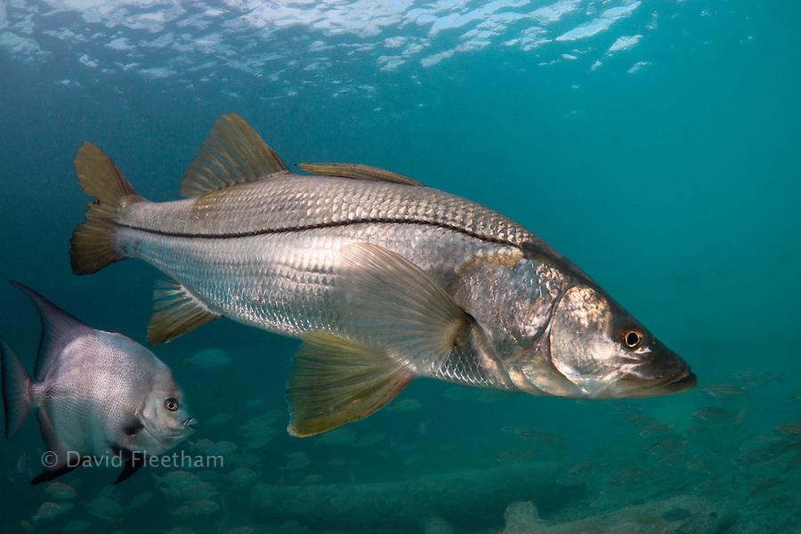 underwater fish photography