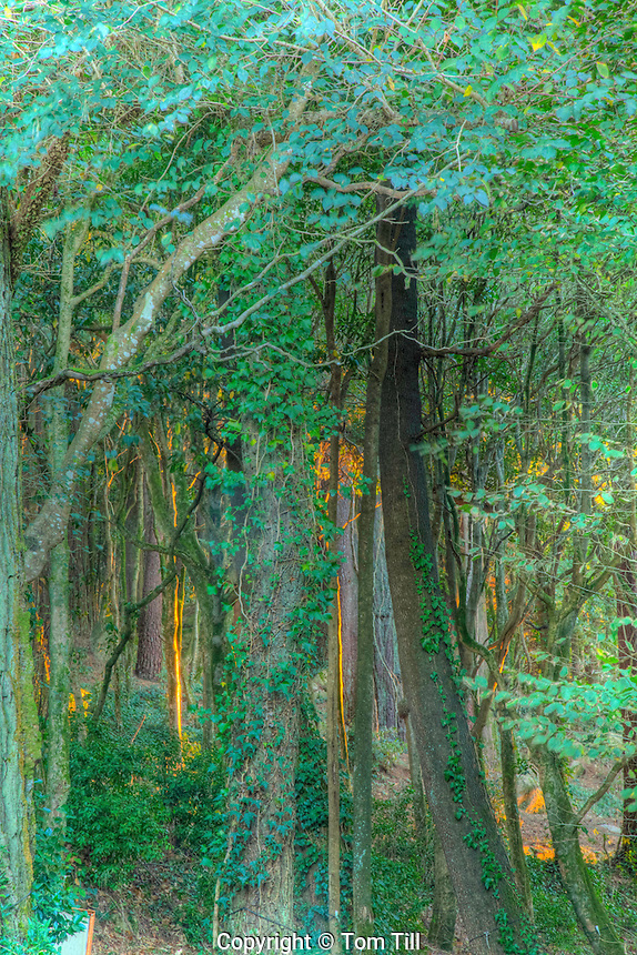 Forest at Pena Palace, Pena Park, Sintra World Heritage Site, Portugal Built by queen Dona Maria II in 1800's.