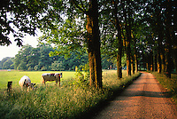 Dutch countryside, Kring van Dorth, near Deventer, the Netherlands