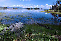 High water from spring runoff changes the ecology of this meadow, at least temporarily.<br /> Mouth of Pelican Creek as it feeds into Yellowstone Lake. YNP