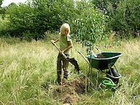 Kind, Junge pflanzt einen Obstbaum, Kirschbaum auf einer Wiese, Streuobstwiese, füllt das Pflanzloch um den Baum mit nährstoffreicher Erde, Kompost auf