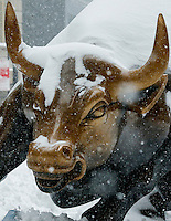 "The New York Stock Exchange Bull ""NYSE Bull"" is covered with snow during the pass of the winter storm JONAS, in New York, 01/23/2016. Photo by VIEWpress"