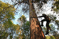 A leather cord around his waist, the bortyevic climbs in the manner of pruners, his feet supported by the notches hollowed out by his ancestors.