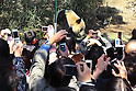 April 1, 2011, Tokyo, Japan - A male giant panda &quot;Ri Ri&quot; is seen at Ueno Zoo in Tokyo on Friday, April 1, 2011, on the first day its appearance with a fellow female panda &quot;Shin Shin&quot;, not seen, to the public. Thousands of visitors flocked to catch a first glimpse of a pair of pandas on loan from China, in a welcome respite from the gloom over last month's massive earthquake and tsunami in northern Japan. (Photo by Daiju Kitamura/AFLO) [1045] -ty-.