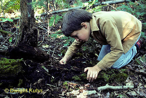 DT02-020a  Forest - boy collecting organisms from soil