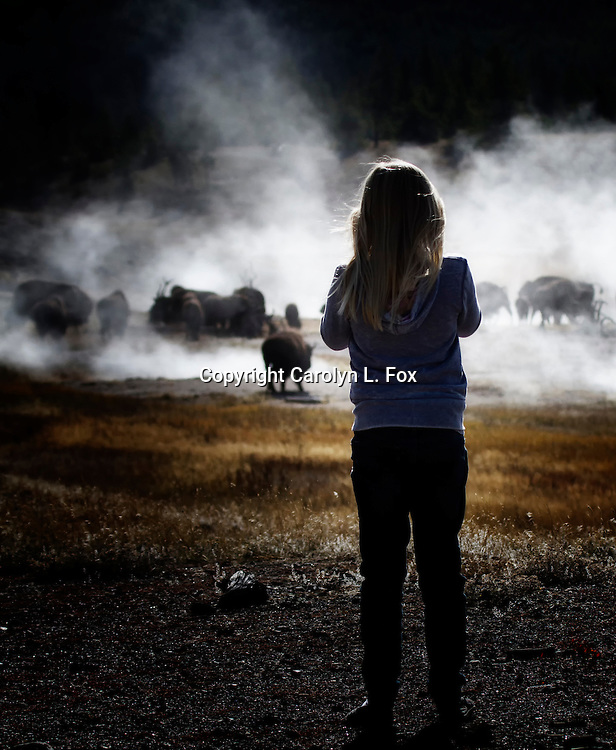 A young girl stands looking at bison enjoying the steam coming from hot pools in yellowstone National Park.