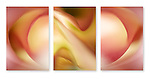 Close-up / macro photographic triptych of  pink calla lily flowers. Images 257, 258 and 259.