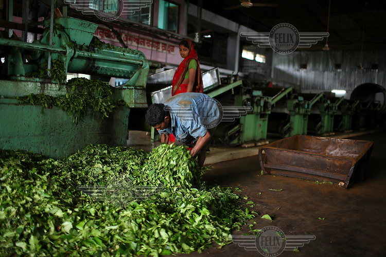Worker at the tea processing factory in Saman Bagh Tea Estate.