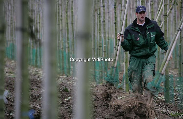 Foto: VidiPhoto..DODEWAARD - Personeel van boomkwekerij Huverba uit Opheusden oogst bomen op een perceel in Dodewaard. Omdat de Betuwse kleigrond door de hevige regenval van de laatste dagen nogal drassig is, gebeurt het verwijderen van bomen met een machine die voorzien is van rupsbanden. De herfstperiode is voor boomkwekers oogsttijd. De meeste bomen zijn bestemd voor de export naar met name Duitsland. Huverba, een van de grotere boomkwekers, plant tussen 50.000 en 80.000 nieuwe bomen per jaar.