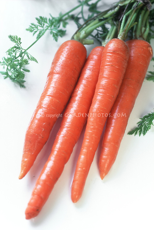 Carrot 'Choctaw' vegetable harvested crop on white background