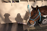 Self portrait with the shadow and horse of a Houston Rodeo trailrider in Memorial Park in 2012.