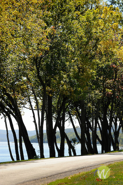 Isle of Que, Susquehanna River. River view locust trees.