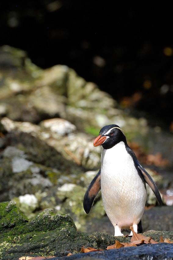 Bright White Shirt - Snares Islands penguins