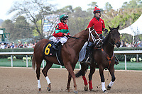 HOT SPRINGS, AR - March 18: Race winner Malagacy #6 and jockey Javier Castellano in the post parade before the Rebel Stakes (Gr.2) at Oaklawn Park on March 18, 2017 in Hot Springs, AR. (Photo by Ciara Bowen/Eclipse Sportswire/Getty Images)