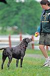Woman & Labrador Playing With Ball