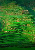 Rice Terraces, Banaue,Philippines