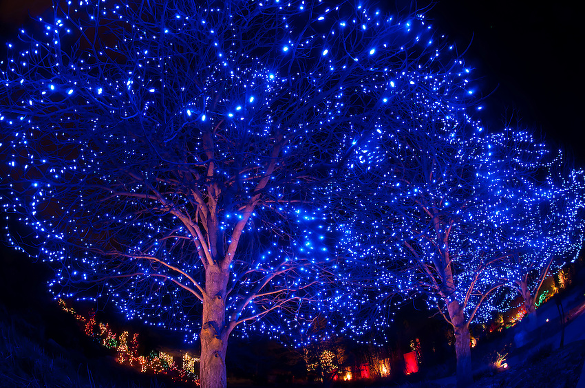 Blossoms of Light , one million lights illuminating the ...