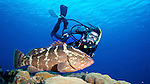 Diver and Nassau Grouper, Little Cayman Island
