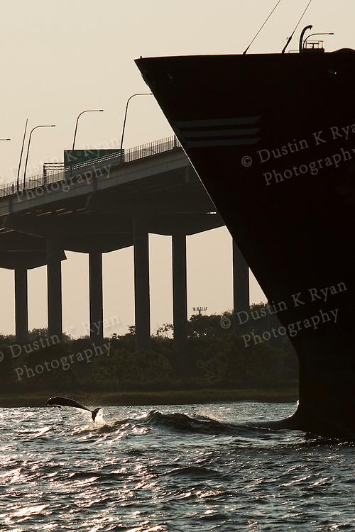 Container Ships charleston south carolina bottlenose dolphin jumping bow wake