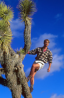hiker on top of a tall Joshua Tree in the desert of California