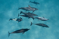 RW4929-D. Atlantic Spotted Dolphins (Stenella frontalis), resident pods of wild dolphins in the Bahamas off Bimini and Grand Bahama Island offer eco-tourists from around the world a superb encounter swimming with the playful marine mammals. Bahamas, Atlantic Ocean.<br /> Photo Copyright &copy; Brandon Cole. All rights reserved worldwide.  www.brandoncole.com