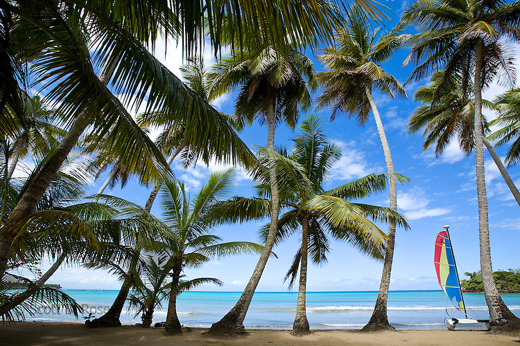 Beautiful Playa Bonita with palm trees and Hobie Cat, Las Terranas, Samana, Dominican Republic