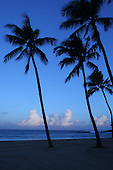 Feb. 17, 2006; Waimea, Oahu, HI - Palm trees at Waimea Bay on the north shore of Oahu...Photo Credit: Darrell Miho.© Darrell Miho