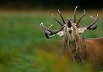 Deer & Birds of Prey