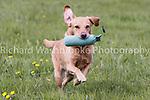 Windsor Dog Trial  19th April 2014