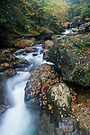 East Fork of the Pigeon River, fall, Shining Rock Wilderness, Pisgah National Forest, North Carolina