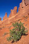 Juniper and rock formations along Park Avenue, Arches National Park, Utah USA