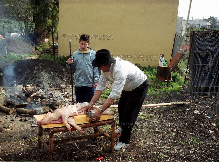 Roma  5 Marzo  2004.Rom bosniaco prepara il maialino per la festa di matrimonio  al campo di Tor De Cenci..Rome, March 5, 2004.Bosnian roma prepare the pig for the wedding to the field of Tor de Cenci.