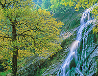 Powerscourt Waterfall in spring  County Wicklow, Republic of Ireland   Wicklow Mountains  Highest waterfall in Ireland  Powerscourt Natural Area