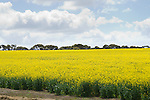 KI Pure Grain, Kangaroo Island.
