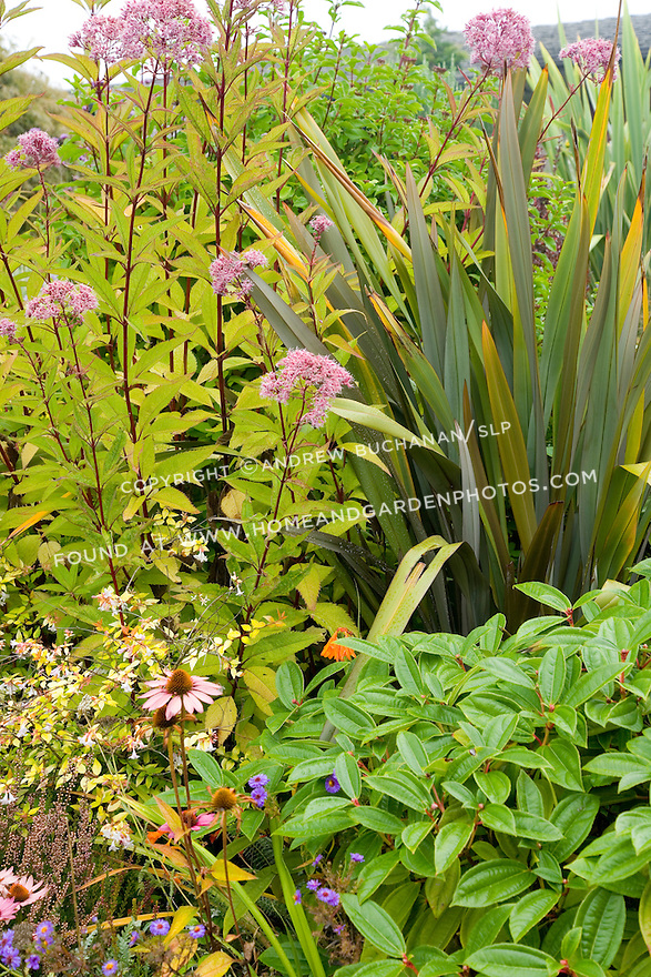 A fall foliage garden for Hearty low maintenance plants