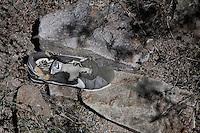 Sonora desert Mexico Arizona  illegal mexican immigrants Traces, objects let during the desert march<br /> Tracce, una scarpa aabbandonata durante la traversata del deserto da immigrati clandestini messicani nel tentativo di espatriare illegalmente negli Stati Uniti
