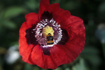 Lensbaby Poppy Bee Macro Series