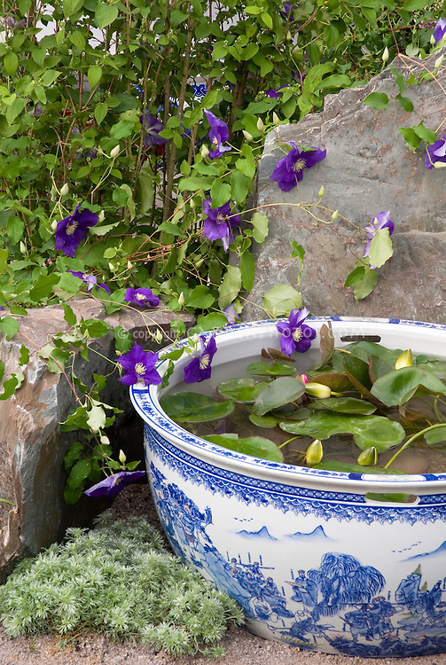 Small Container Water Garden Plant Flower Stock Photography