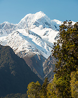 Mount Tasman of Southern Alps and native forest, Westland Tai Poutini National Park, West Coast, UNESCO World Heritage Area, South Westland, New Zealand, NZ
