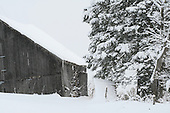 snowy winter day, view of old barn and snow covered trees in barn yard, Rawdon, Quebec' Canada